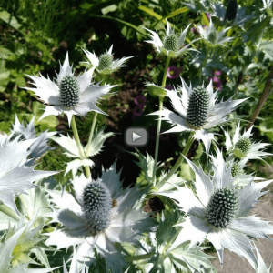 Image of Flowers - Click to watch Kate's Storytree